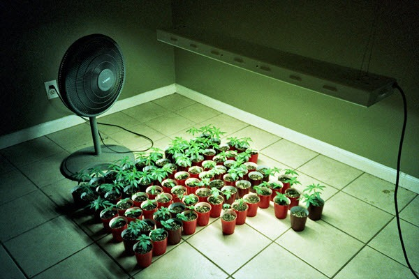 Growing marijuana indoors - room