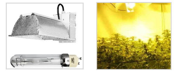 Marijuana grow lights - CMH lights