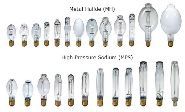 Marijuana grow lights - HID bulbs