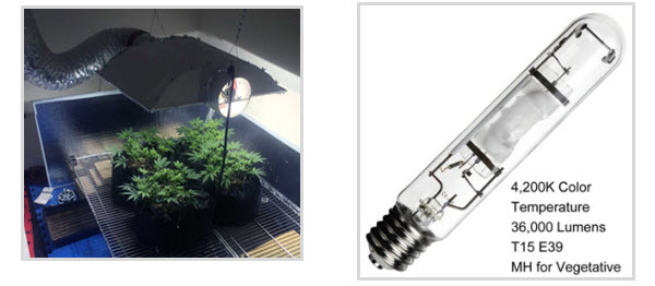 Marijuana grow lights - MH lights