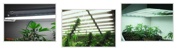Marijuana grow lights - T5s