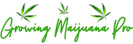 Growing Marijuana Pro