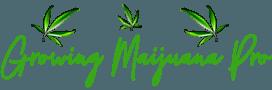 Growing Marijuana Pro