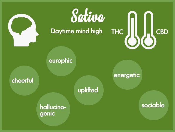 Marijuana strains - Sativa marijuana strain THC vs CBD