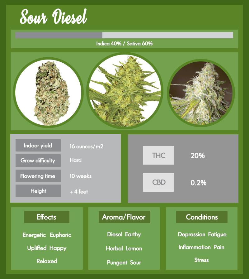 Sour Diesel Marijuana Infographic
