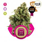 Sour Diesel Marijuana - Seedsman