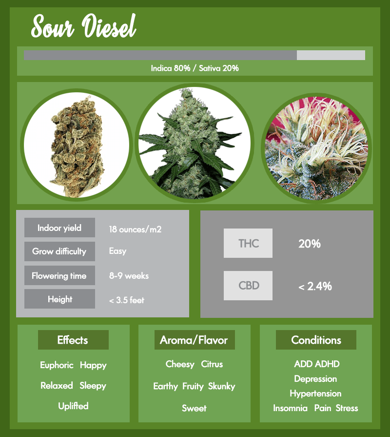 Super Skunk strain infographic