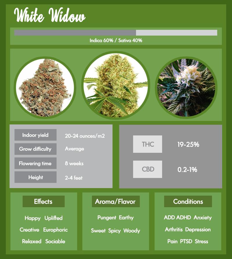 White Widow Marijuana Infographic
