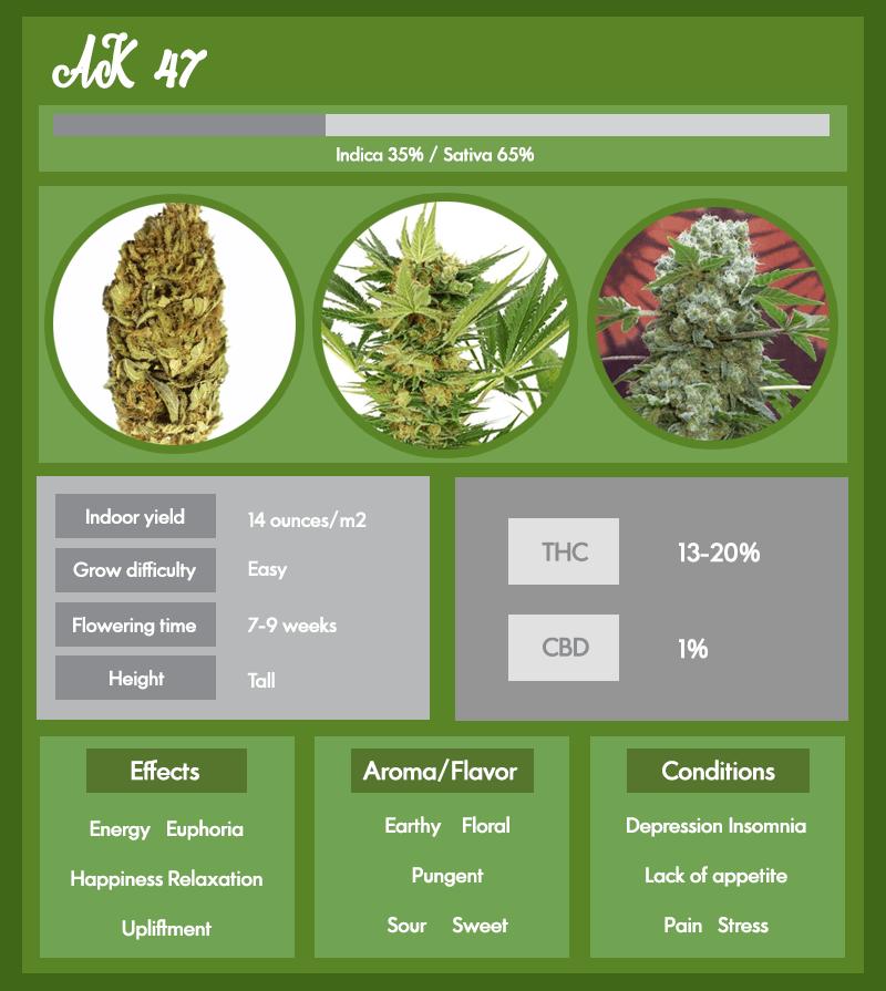 AK 47 strain infographic