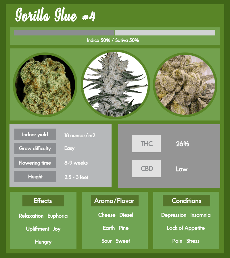 GG4 or Gorilla Glue #4 infographic