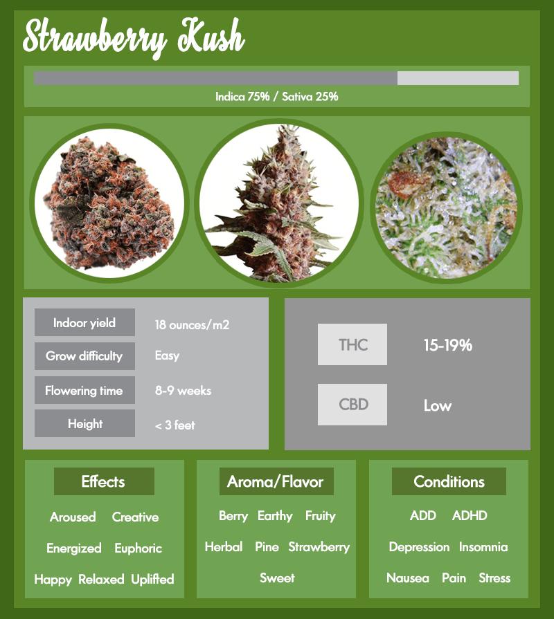 Strawberry Kush weed infographic
