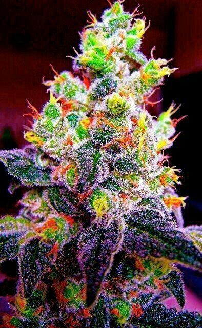 The Most Beautiful Pictures Of Marijuana Plants Growing