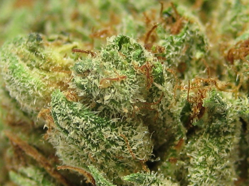 og kuh wow that is weed!